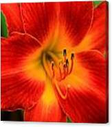 Day Lily1 Canvas Print