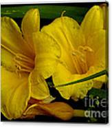 Day Of The Lilies  Canvas Print