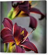 Daylilies Forever Canvas Print