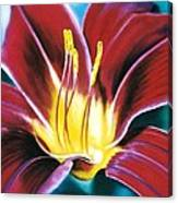 Daylilly Georgia Style Canvas Print