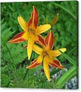 Frans Hall Daylily Attention Getter Canvas Print
