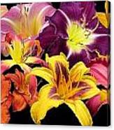 Daylily Banner Canvas Print