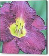 Daylily Collection #26 Canvas Print
