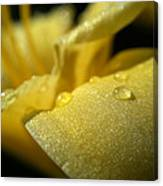Daylily Dew Drops Canvas Print
