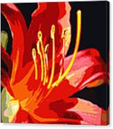 Daylily Flame Canvas Print