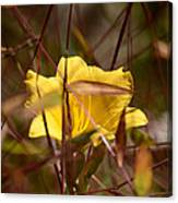 Daylily In Autumn Canvas Print