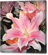 Pink Daylily In Bloom Canvas Print