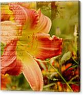 Daylily Memories Canvas Print