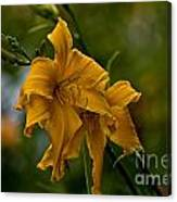 Daylily Picture 474 Canvas Print