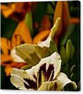 Daylily Picture 487 Canvas Print