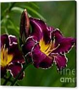 Daylily Picture 526 Canvas Print