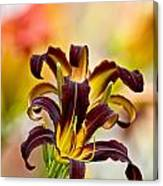 Daylily Picture 541 Canvas Print