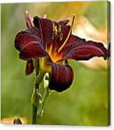 Daylily Pictures 576 Canvas Print