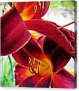 Daylily Twice Canvas Print