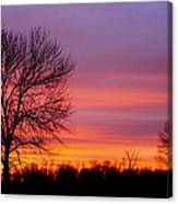 Day's End Elm Canvas Print