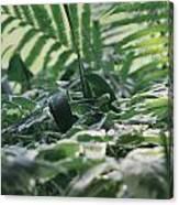 Dazzle Camouflage Patterns In The Garden Canvas Print