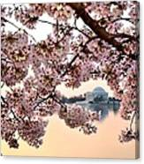 Dc In Bloom IIi Canvas Print