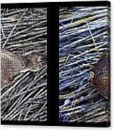 Dead Fish Lives 6a Canvas Print