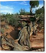 Dead Horse Point Tree 1 Canvas Print