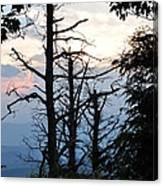 Dead Pines Along The Parkway Canvas Print
