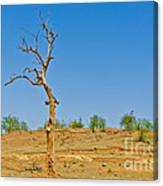 Dead Single Tree Canvas Print
