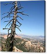 Dead Tree At Bryce Canyon  Overlook Canvas Print
