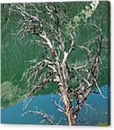 Dead Tree At Green River Lakes -wyoming Canvas Print