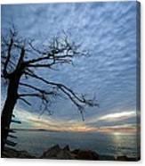 Dead Tree At Otter Cliffs Canvas Print