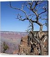 Dead Tree At The View Point Canvas Print