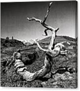 Dead Tree Craters Of The Moon Id Canvas Print