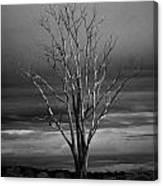 Dead Tree Canvas Print