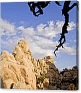 Dead Tree Limb Hanging Over Rocky Landscape In The Mojave Desert Canvas Print