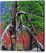 Dead Tree On Cinder At Sunset Crater Canvas Print