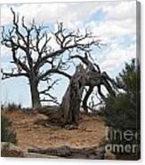 Dead Tree - Natural Bridges National Park Canvas Print