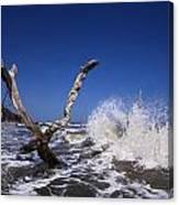 Dead Tree Splash Canvas Print