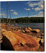 Dead Trees And Rocks Canvas Print