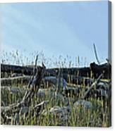 Deadfall And Grasses And Brushed Blue Skies Canvas Print