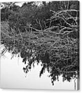 Deadfall Reflection In Black And White Canvas Print
