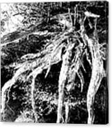 Deadtree Canvas Print