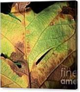 Death Of A Leaf Canvas Print