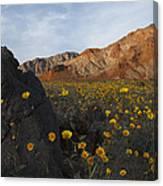 Death Valley Spring 1 Canvas Print