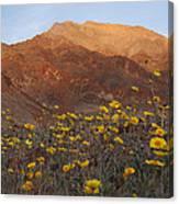 Death Valley Spring 2 Canvas Print