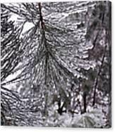 December Freeze  Canvas Print