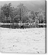 December Snow 006 B-w Canvas Print