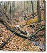 Deciduous Forest With Ravines Canvas Print