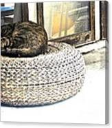 Deck Cat Canvas Print