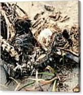 Decomposing Dead Bird Canvas Print