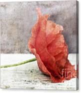 Decor Poppy Red Canvas Print