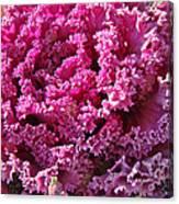Decorative Fancy Pink Kale Canvas Print