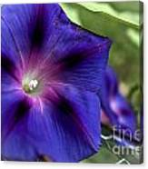 Deep Blue Morning Glories Canvas Print